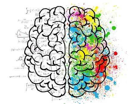 33 brain-2062057__340