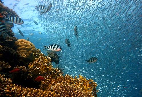 fish-378286__340