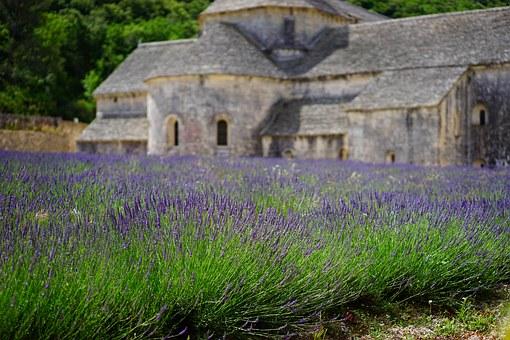 lavender-1275377__340