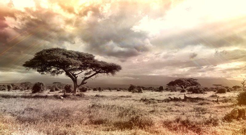 miniaturki_podróże_afryka 1