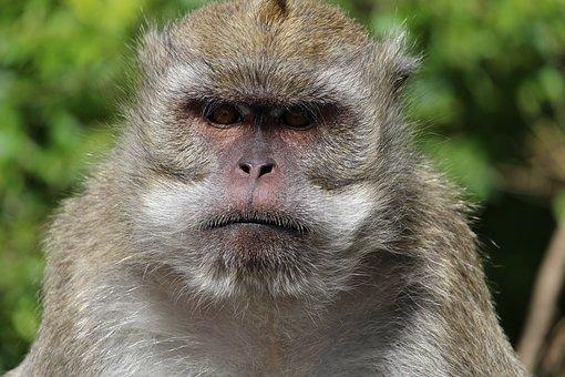 monkey-2349464__340