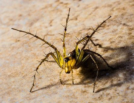 small-spider-313118__340