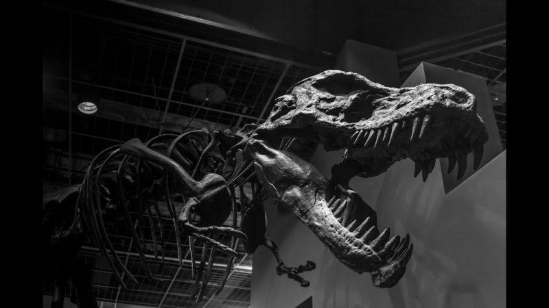 Drapieżne dinozaury [HD]