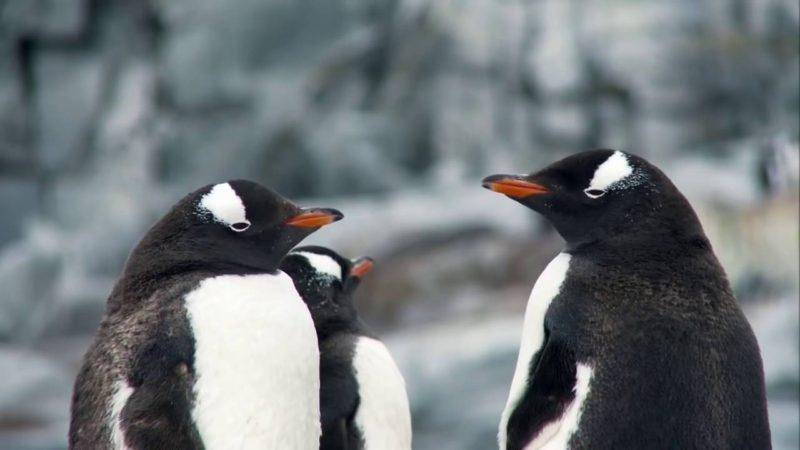 Magia Wielkiego Błękitu – Antarktyka [HD]