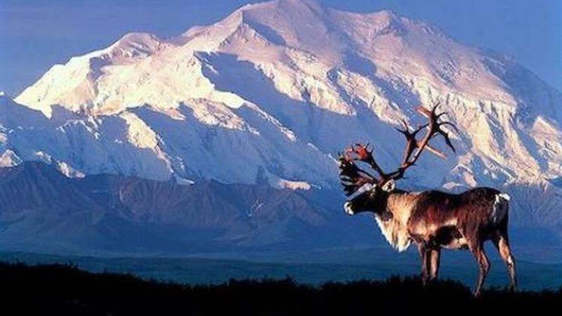 Alaska – Duch dzikiej przyrody
