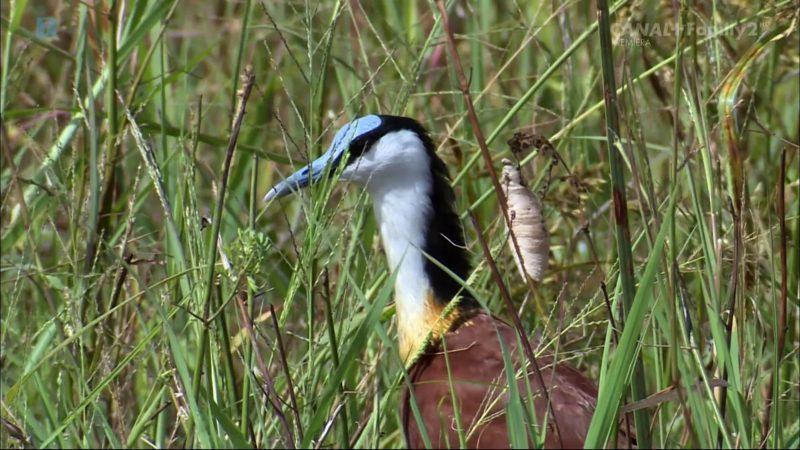 Dzika Przyroda – Ptaki Afryki