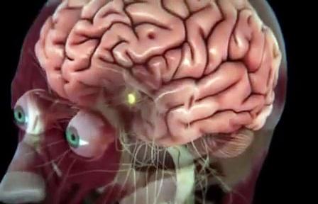 Granice ludzkich możliwości – Siła mózgu