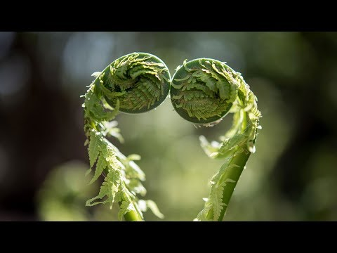Inteligencja roślin [HD]