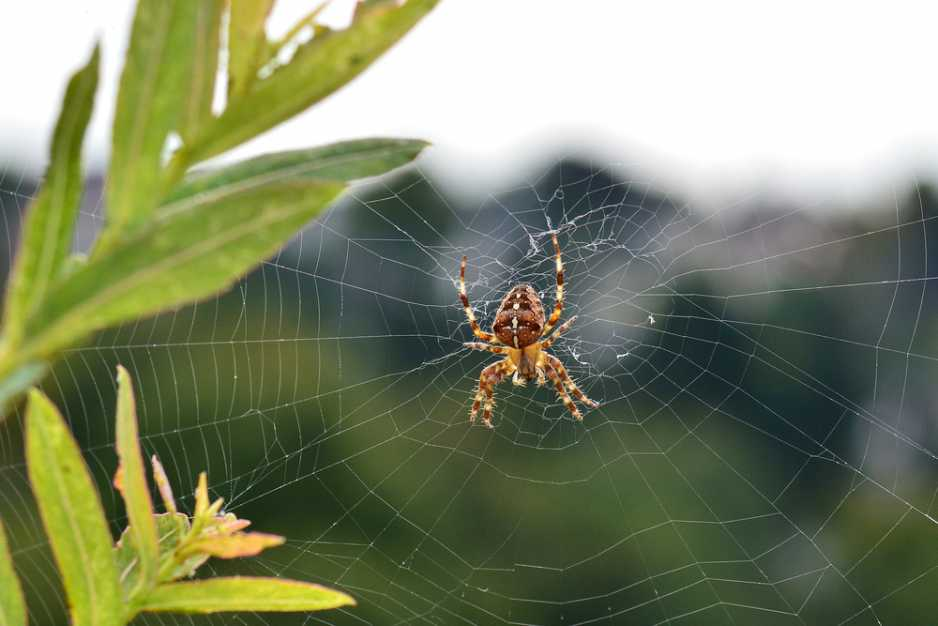 pająk sdbjpeg