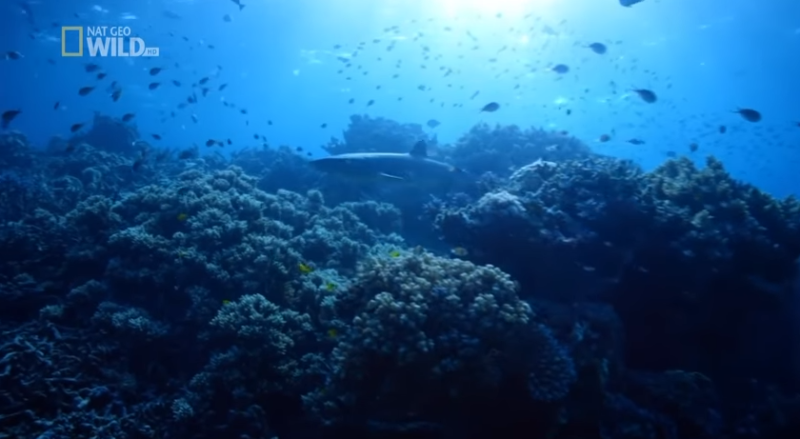 Życie Wielkiej Rafy Koralowej – cz. 1 [HD]